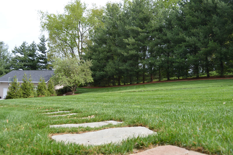 Freshly Manicured Lawn
