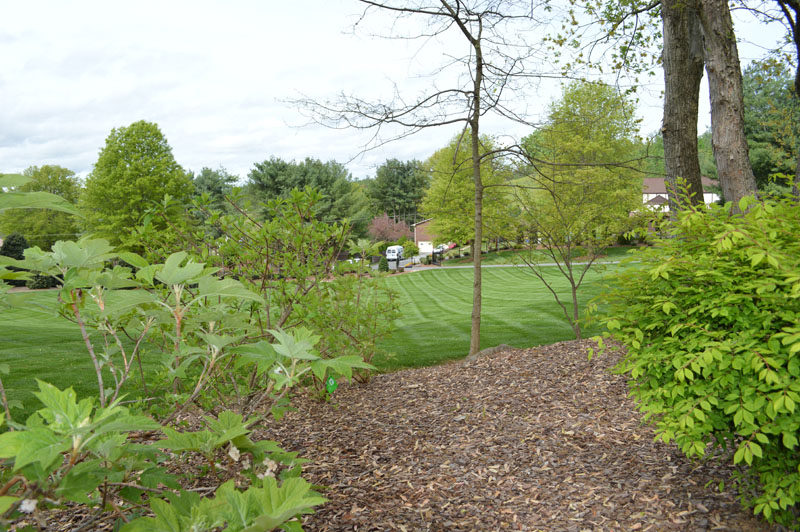 Manicured Lawn and Landscaped Area