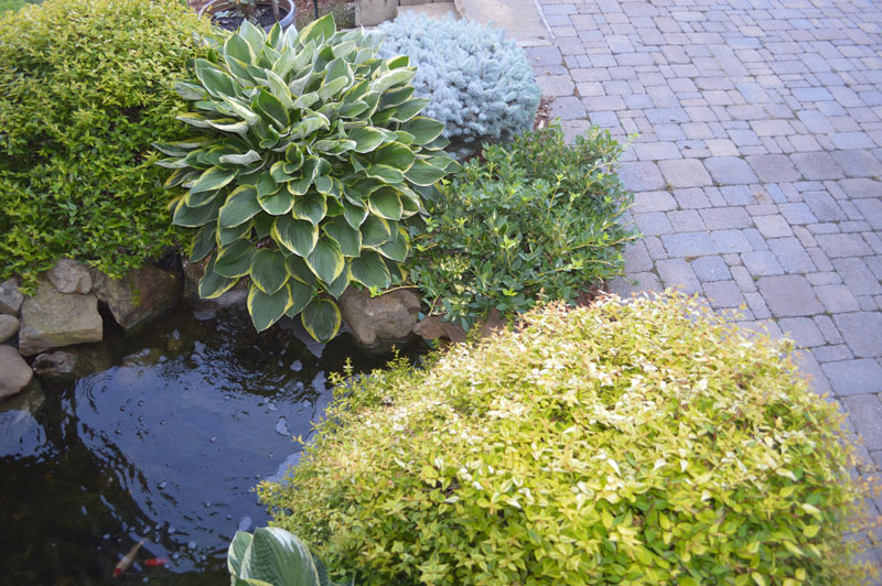 Landscaped Pond Area